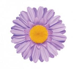 Handlebar Lilac Daisy