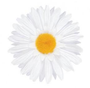 Handlebar White Daisy